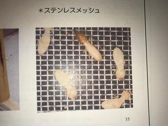 シロアリターミメッシュシート大きさ比較