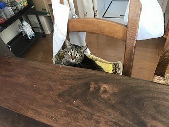 改修工事家族ネコ